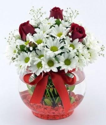 Fanusta 3 Gül ve Papatya  Balgat Ankara çiçek siparişi sitesi