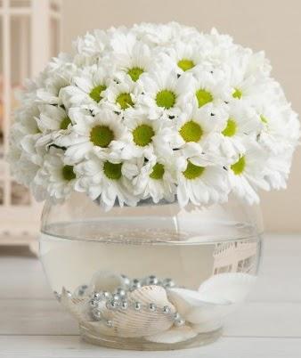 Fanusta beyaz Papatya  çiçek satışı ankara balgat çiçekçi