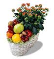 balgat çiçek siparişi Ankara çiçek yolla  meyva sepeti ve kalanche