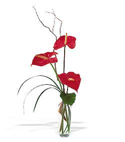 Ankara internetten çiçek satışı  cam yada mika Vazoda 3 adet  antoryum