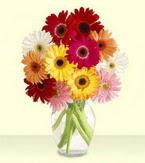 Balgat çiçek yolla , çiçek gönder , çiçekçi   cam yada mika vazoda 15 özel gerbera