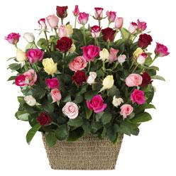 41 adet karisik gül sepeti   Balgat Ankara online çiçek gönderme sipariş