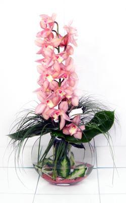 Balgat Ankaradaki çiçekçiler  cam içerisinde tek dal orkide
