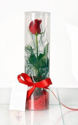 Balgat online çiçekçi telefonları  Silindir vazoda tek kirmizi gül
