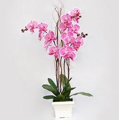 Ankara cicekciler , cicek siparisi  2 adet orkide - 2 dal orkide