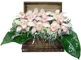 Balgat  ucuz çiçek , çiçekçi , çiçekçilik  sandik içerisinde 1 dal orkide