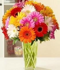 Ankara çiçek servisi , çiçekçi adresleri  15 adet gerbera çiçek vazosu