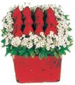 Balgat çiçek gönderme sitemiz güvenlidir  Kare cam yada mika içinde kirmizi güller - anneler günü seçimi özel çiçek