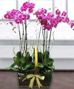 4 dallı mor orkide  Ankara güvenli kaliteli hızlı çiçek