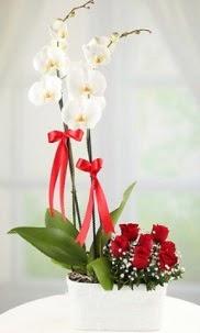 2 dallı beyaz orkide ve 7 kırmızı gül  Balgat Ankara uluslararası çiçek gönderme