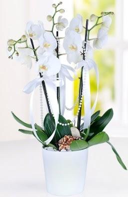 3 dallı beyaz orkide  Balgat online çiçekçi telefonları