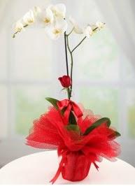 Tek dal beyaz orkide tek dal kırmızı gül  Balgat Ankara çiçek siparişi sitesi