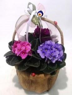 Sepet içerisinde 3 adet menekşe  hediye sevgilime hediye çiçek