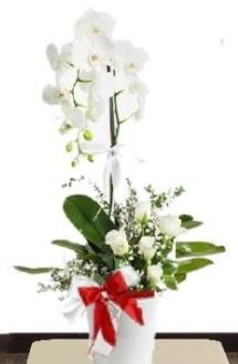 Tek dallı beyaz orkide 5 beyaz gül  Ankara internetten çiçek satışı