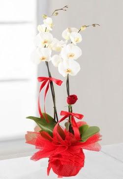 2 dallı beyaz orkide ve 1 adet kırmızı gül  hediye sevgilime hediye çiçek