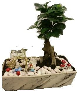Japon ağacı bonsai satışı  hediye sevgilime hediye çiçek