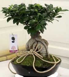 Japon ağacı bonsai satışı  Ankara çiçek servisi , çiçekçi adresleri