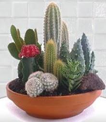 9 adet kaktüs ve seramik vazo  hediye sevgilime hediye çiçek