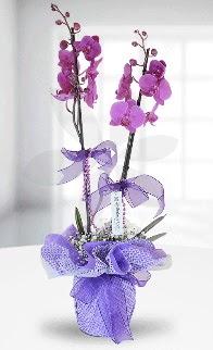 Çift dallı mor orkide LİKE MARKADIR  hediye sevgilime hediye çiçek