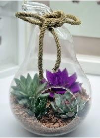 Orta boy armut 3 kaktüs terrarium  Balgat Ankara çiçek siparişi sitesi