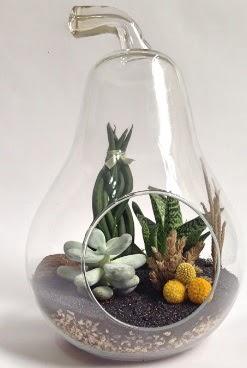 Orta boy armut 5 kaktüs terrarium  Balgat  ucuz çiçek , çiçekçi , çiçekçilik