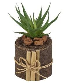Doğal kütük içerisinde 1 adet kaktüs  Balgat  ucuz çiçek , çiçekçi , çiçekçilik