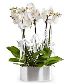 Beş dallı metal saksıda beyaz orkide  Balgat online çiçekçi telefonları