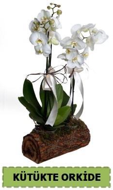 Kütük içerisinde 2 Adet tek dallı orkide  hediye sevgilime hediye çiçek