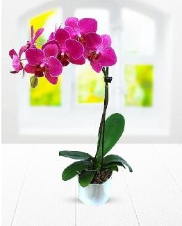 Tek dallı mor orkide  çiçek satışı ankara balgat çiçekçi