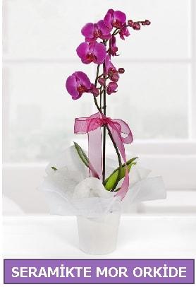 Seramik içerisinde birinci kalite tek dallı mor orkide  balgat çiçek siparişi Ankara çiçek yolla