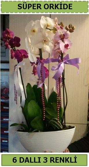 6 dallı 3 renk özel vazoda orkide çiçeği  çiçek satışı ankara balgat çiçekçi