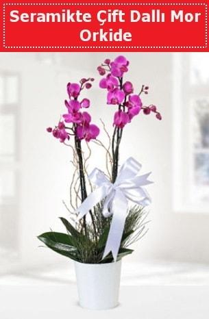 Seramikte Çift Dallı Mor Orkide  hediye sevgilime hediye çiçek