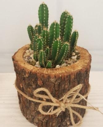 Kütük içerisinde özel kaktüs bitkisi  çiçek satışı ankara balgat çiçekçi